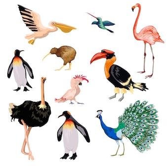 Conjunto de aves exóticas