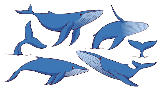 Conjunto de ballena azul dibujado a mano