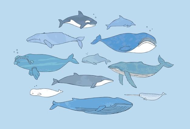 Conjunto de ballenas diferente. colección de ilustración de doodle dibujado a mano con textura.