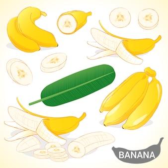 Conjunto de banano en formato vectorial de varios estilos.