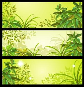 Conjunto de banners de vector de selva tropical