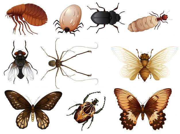 Conjunto de bichos e insectos