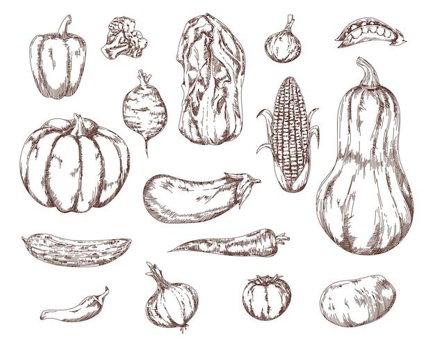 Conjunto de bocetos de ingredientes de ensalada de verduras de jardín