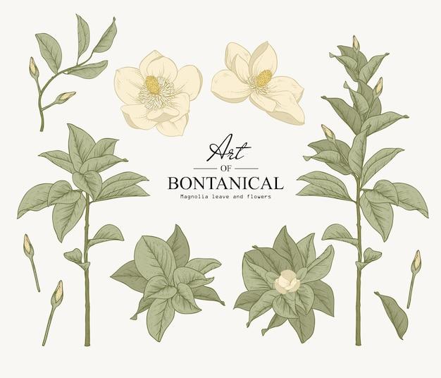 Conjunto de botánica sketch. dibujos de flores y hojas de magnolia. hermosa línea de arte. ilustraciones