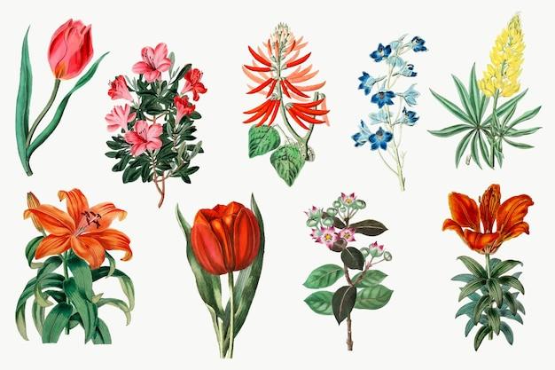 Conjunto botánico vintage de vector de flores florecientes