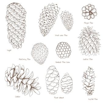 Conjunto botánico
