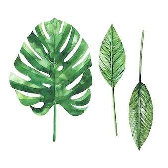 Conjunto de brillantes hojas tropicales acuarelas. hojas y ramas de la selva.