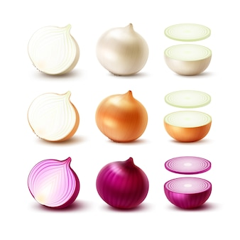 Conjunto de bulbos de cebolla fresca entera y en rodajas