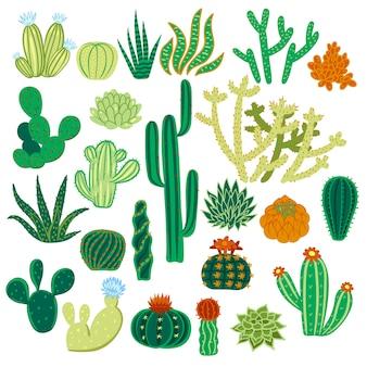 Conjunto de cactus aislado sobre fondo blanco.