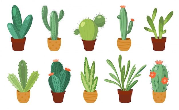 Conjunto de cactus de dibujos animados.