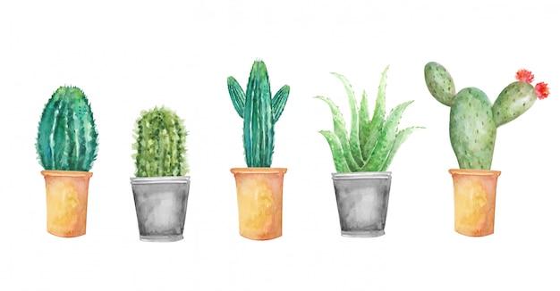 Conjunto de cactus floral acuarela