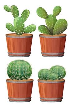 Conjunto de cactus en una olla de madera aislado sobre fondo blanco.