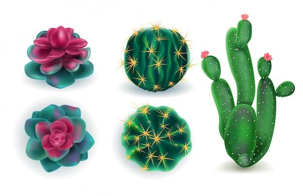 Conjunto de cactus de plantas de interior.