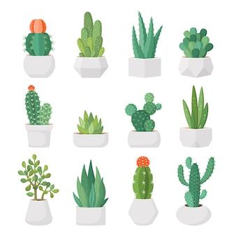 Conjunto de cactus y suculentas de dibujos animados en macetas