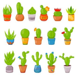 Conjunto de cactus y suculentas en macetas.