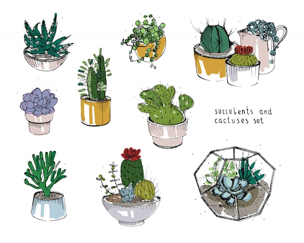 Conjunto de cactus y suculentas. plantas de recolección en macetas, ilustración de florario