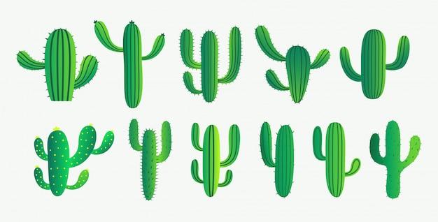 Conjunto de cactus verde y planta suculenta