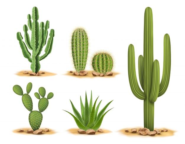Conjunto de cactus