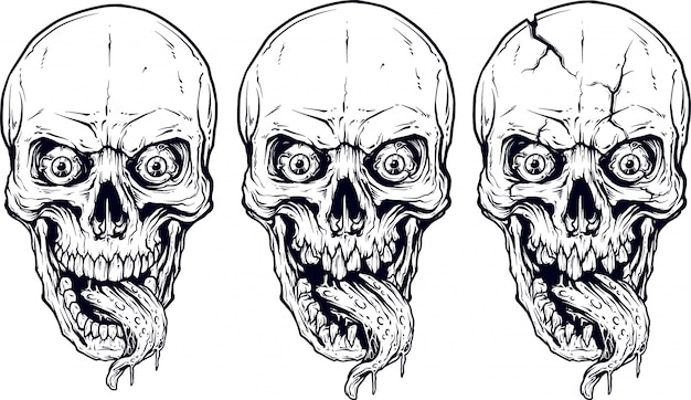 Conjunto de calaveras y mandíbulas humano blanco gráfico detallado