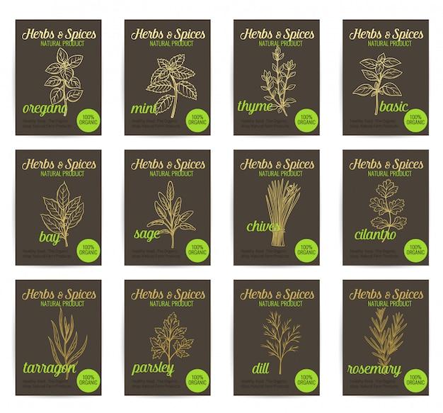 Conjunto de carteles de hierbas y especias culinarias dibujadas a mano.