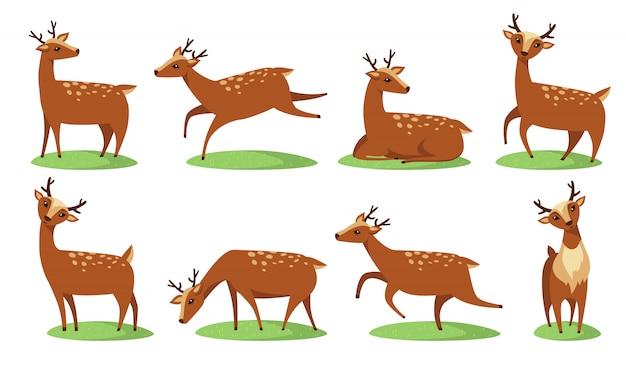 Conjunto de ciervos bebé gracioso
