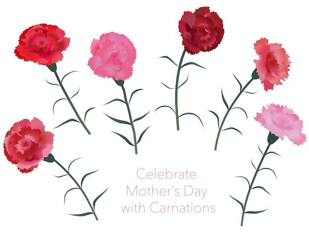 Conjunto de claveles para el día de la madre