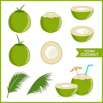 Conjunto de coco joven y fresco