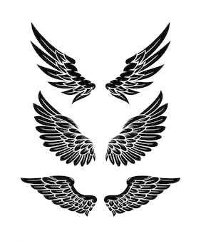 Conjunto de colección de alas