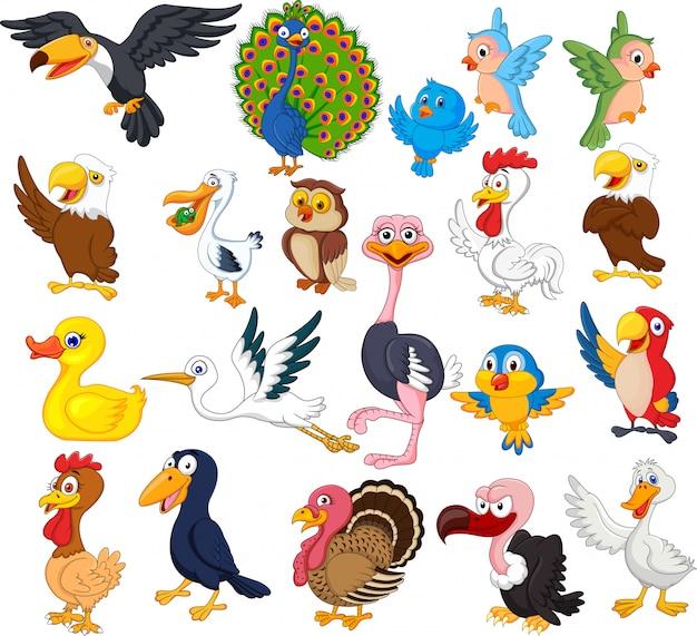 Conjunto de colección de aves de dibujos animados