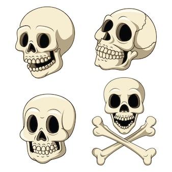 Conjunto de colección de cráneo humano aislado sobre fondo blanco