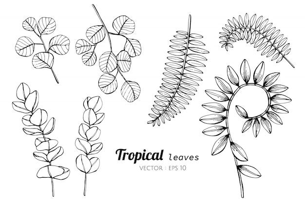 Conjunto de la colección del ejemplo tropical del dibujo de las hojas.
