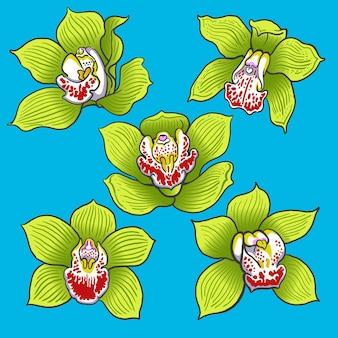 Conjunto de colección de flores de orquídeas verdes