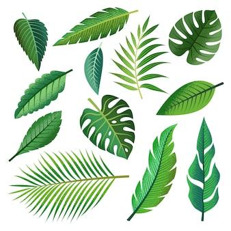 Conjunto de colección de hermosas hojas tropicales.