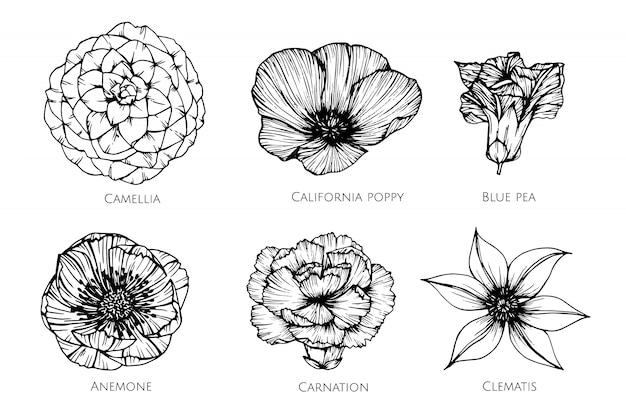 Conjunto de la colección de la ilustración del dibujo de la flor.