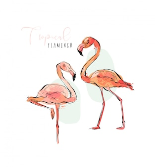 Conjunto de colección de ilustraciones isticas de flamencos rosados de aves tropicales exóticas paraíso en colores pastel aislado sobre fondo blanco.