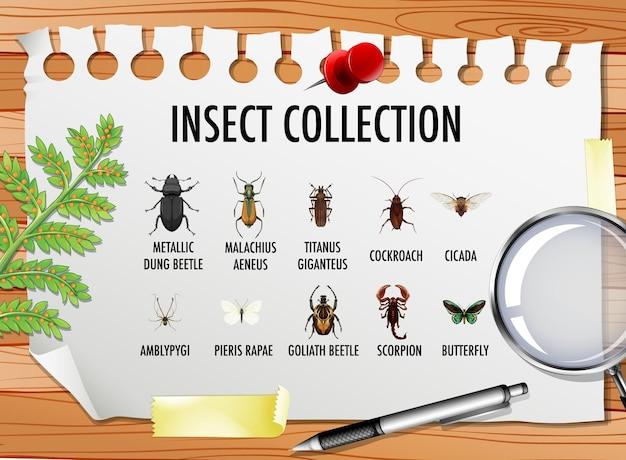 Conjunto de colección de insectos con elementos estacionarios sobre la mesa.