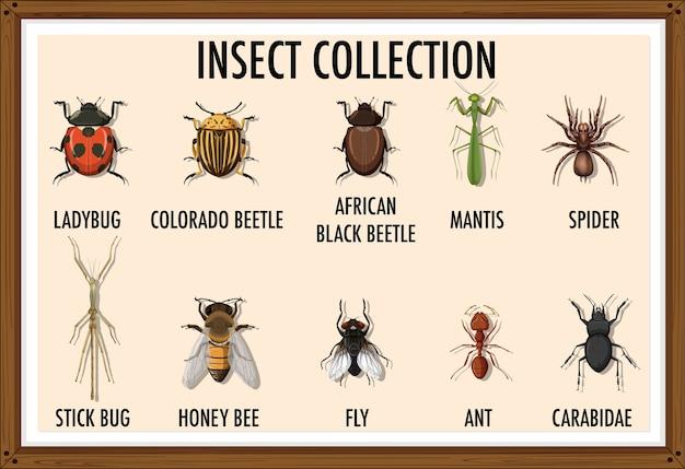 Conjunto de colección de insectos en marco de madera.