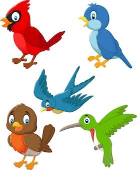 Conjunto de colección de pájaros de dibujos animados