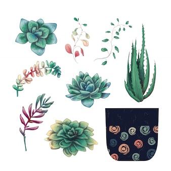 Conjunto de colección de placas de plantas de cactus y suculentas en maceta.