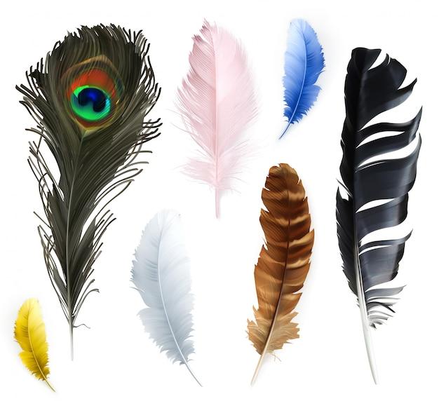 Conjunto de colección de plumas