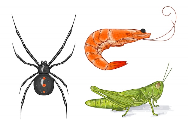 Conjunto de colección de vectores animales dibujados a mano. viuda negra, camarones y saltamontes en estilo de ilustración vectorial pintado a mano.