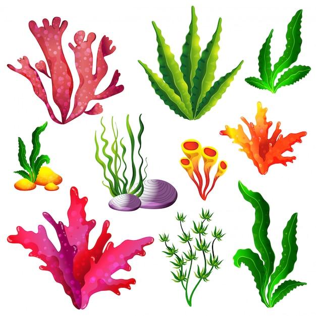Conjunto de coloridas algas marinas