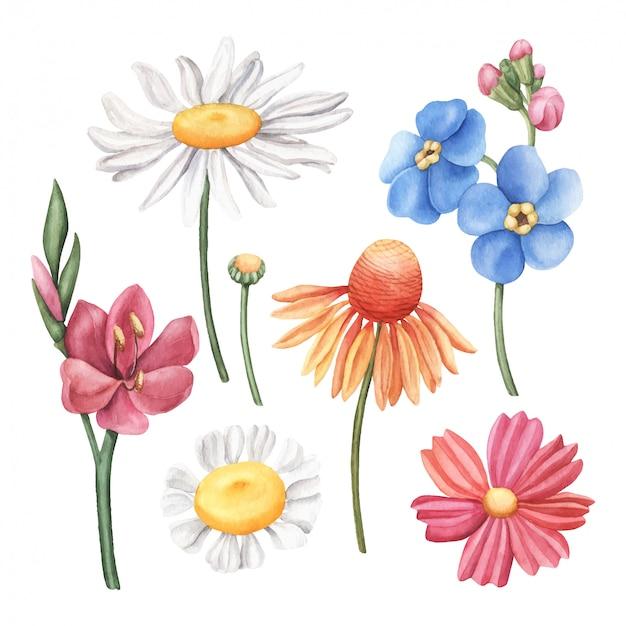 Conjunto de coloridas flores silvestres acuarelas dibujadas a mano