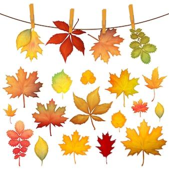Conjunto de coloridas hojas de otoño