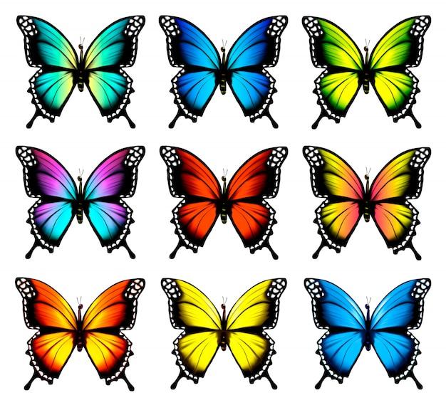 Conjunto de coloridas mariposas. .