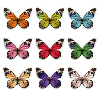 Conjunto de coloridas mariposas