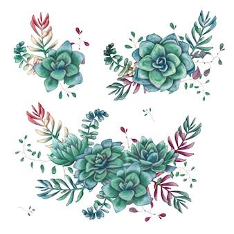 Conjunto de composiciones de suculentas florales en estilo de dibujo a mano.