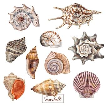 Conjunto de conchas dibujadas a mano.