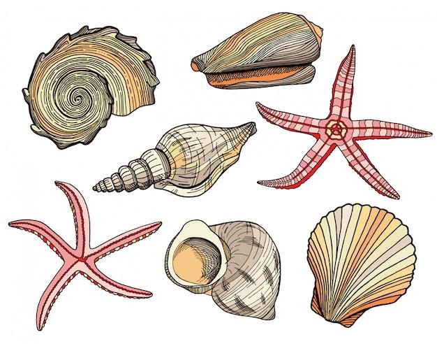 Conjunto de conchas y estrellas de mar de dibujos animados dibujados a mano