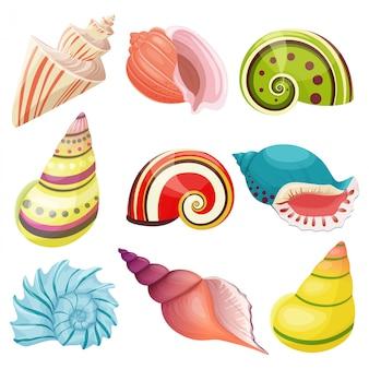 Conjunto de conchas marinas de vector.